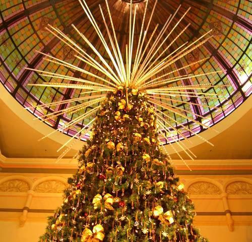 Miljövänliga granar räddar julen för friluftsmänniskor